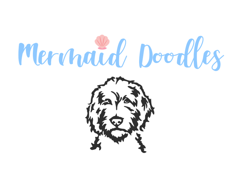 ​Mermaid Australian Labradoodles